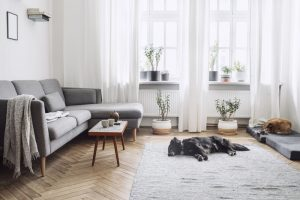 indoor-shot-of-pretty-living-space-with-two-dogs-laying-on-floor